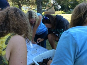 2015 Summer Institure Macroinvertebrate Sampling Windmill Island