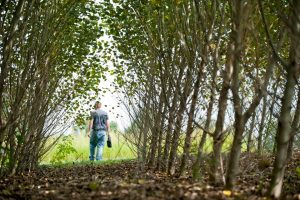 Poplar tree research plot