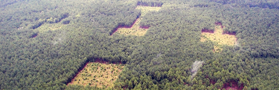 Aerial photo of research plots in the habitat corridor study by Damschen et al.