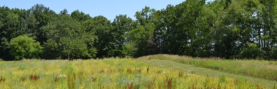 Fields, paths and tree line at Lux Arbor Preserve