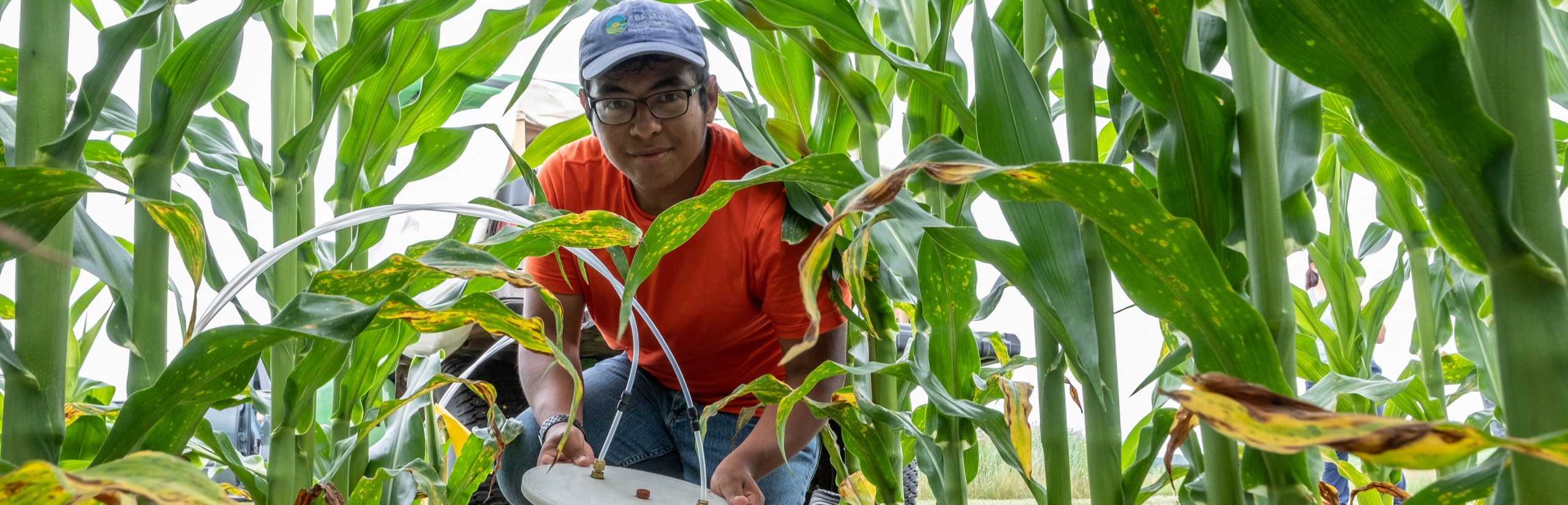 A researcher kneels between corn stalks in a field, holding research equipment and looking at the camera.