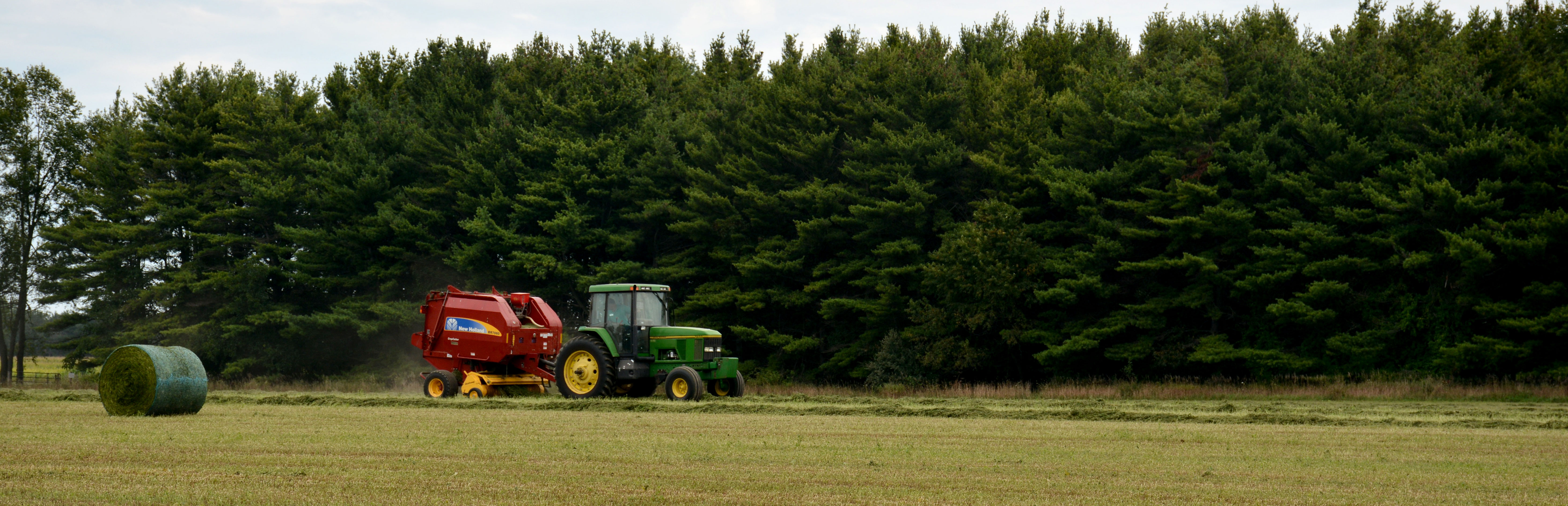 A tractor mows a field along a row of pine trees.