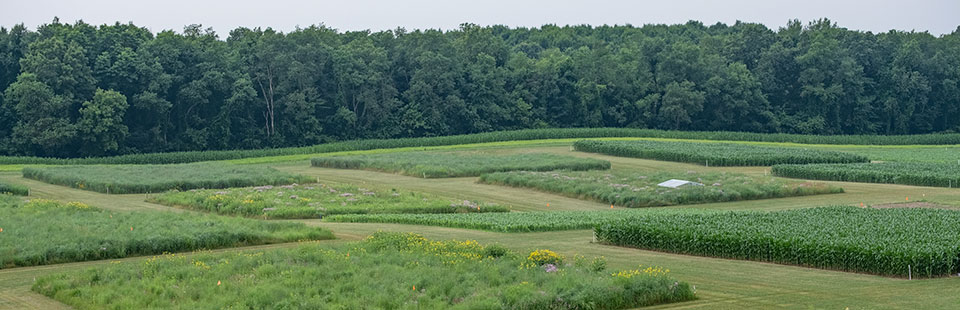 A wide-angle view of the KBS Great Lakes Bioenergy Research Center's square research plots. Photo credit: Kurt Stepnitz Photography