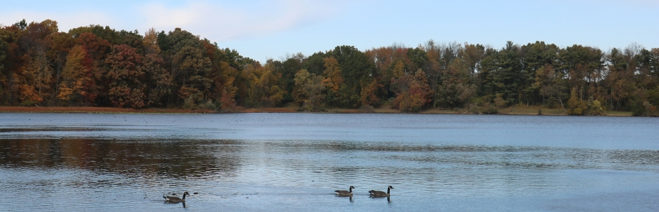 Geese float across Wintergreen Lake against a backdrop of trees in fall color.