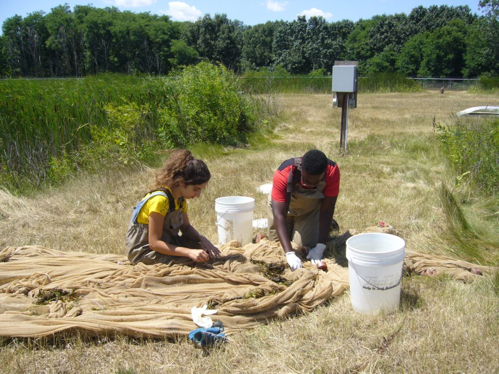 Kabalan and a fellow student pull specimens from their nets