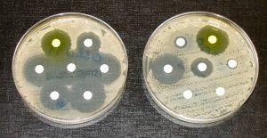 antibiotic_sensitvity_and_resistance