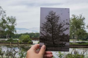 historical then and now photo of the bridge at the Bird Sanctuary