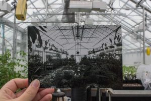 Historical then and now photo of greenhouse
