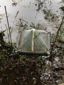 Aquatic Insect Traps