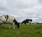Rotational grazing mitigates greenhouse gas emissions