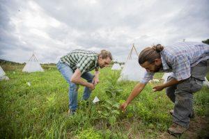 Wetzel & Luke Zehr examine a plant