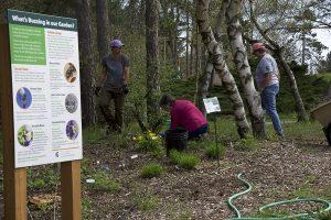 Garden volunteers working in the Sanctuary's pollinator garden