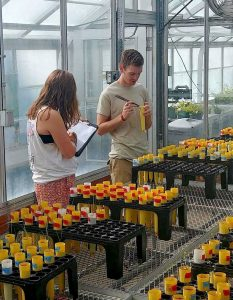 Harry Ervin and a colleague inspect vials in a greenhouse.