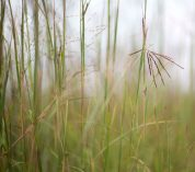 New study suggests grasslands are resilient in the face of climate change – to a point