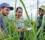 Colin McHugh, Caro Cordova and Nyduta Mbogo examine switchgrass in a research plot.