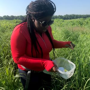 Study coauthor Selassie Ijelu stands in a switchgrass field, holding a trap to measure pest suppression.