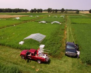 Aerial view of rainout shelters on switchgrass plots.