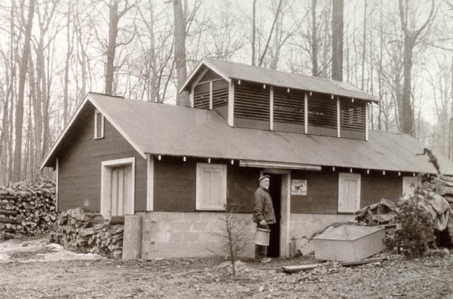 Black-and-white photo of the sugar shack that once stood in the Sanford Woodlot on MSU's main campus.