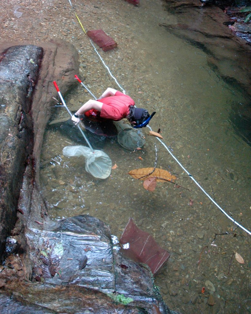 Biologist Sarah Fitzpatrick catches guppies in a steam in Trinidad.