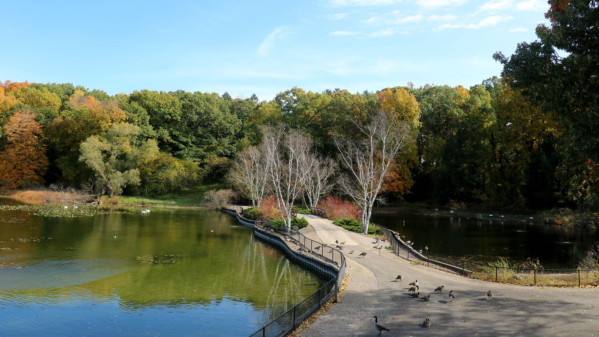 View of the Kellogg Bird Sanctuary bridge.