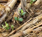 Study on no-till practices highlights the importance of long-term research
