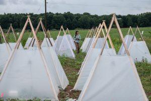Elizeth at her field site running heat wave experiments on plant communities. Photo credit: Kurt Stepnitz Photography
