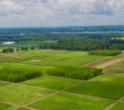 Aerial view of rows of square agricultural research plots at the W.K. Kellogg Biological Station.