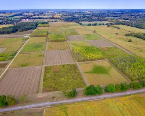 Aerial view of rows of square research plots at the KBS Long-term Ecological Research program site.