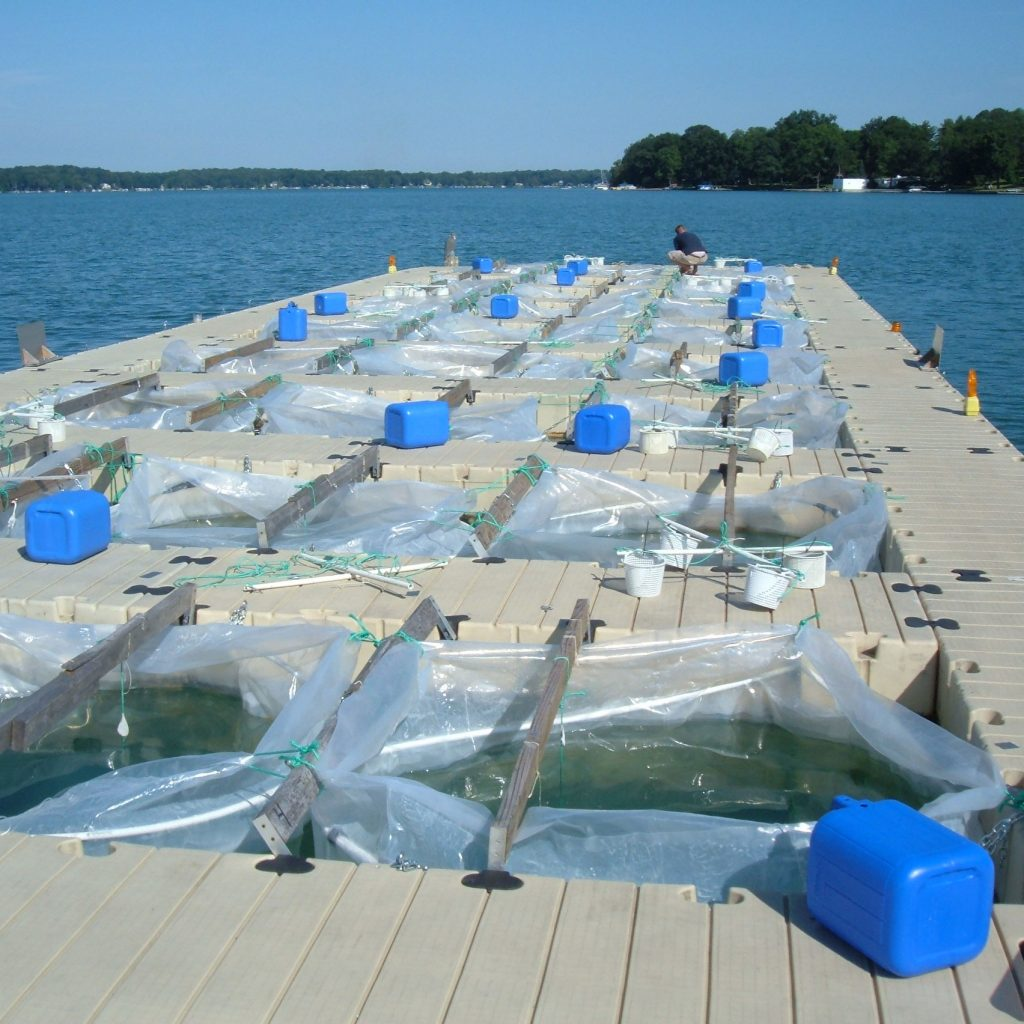 A dock with a series of square openings juts into Gull Lake, with each opening containing a plastic reservoir used for collecting water samples. Credit to Orlando Sarnelle.
