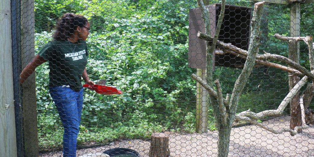 Ashlynn Toles enters a fenced enclosure at the Kellogg Bird sanctuary to deliver fresh food and water to one of the Sanctuary's resident birds.