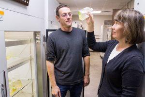 MSU Foundation Professors Chris Klausmeier and Elena Litchman examine a sample in their lab at W.K. Kellogg Biological Station.