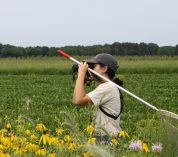 KBS LTER undergraduate researcher Annabelle McCarthy, peers through binoculars while standing in an agricultural field planted with prairie strips. Credit to Jamie Smith.