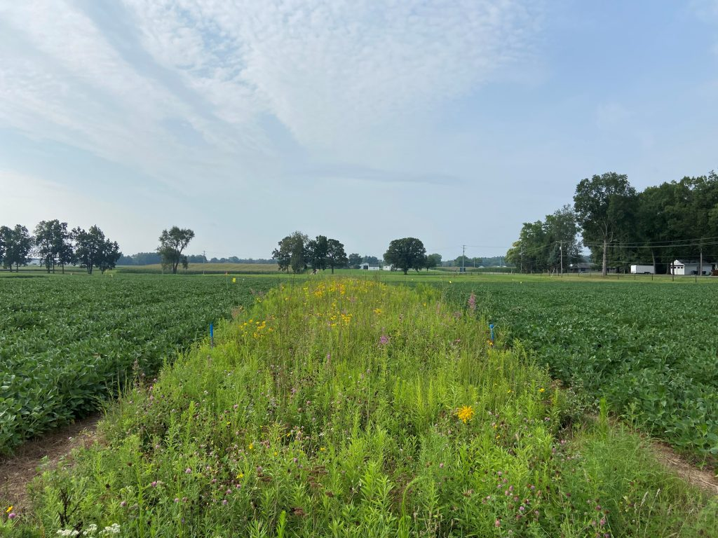Prairie strips are planted within agricultural research fields at the W.K. Kellogg Biological Station Long-Term Ecological Research site.
